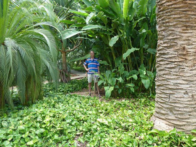 Kijk, dit bedoelen we met groen! We keken ernaar uit op Tenerife tussen het groen te wandelen, na die droogte van de vorige eilanden.
