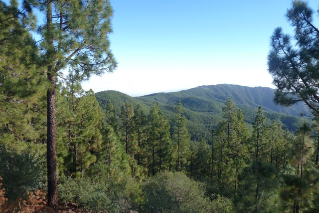 naast de goed gevulde naaldbossen, waar we doorheen rijden op weg naar de vulkaan de Teide.