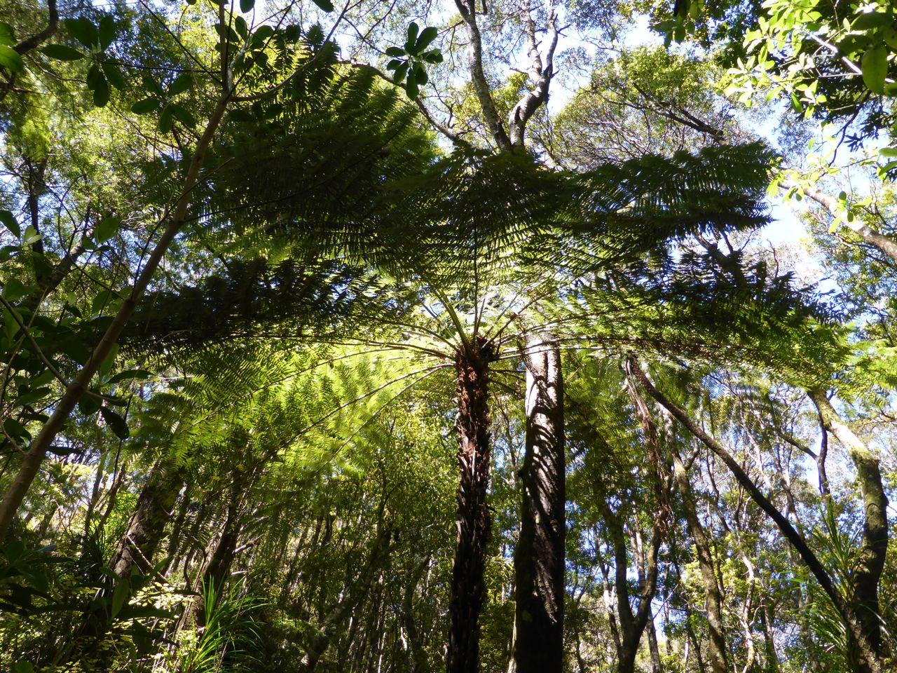 We vergapen ons aan de varens en palmvarens