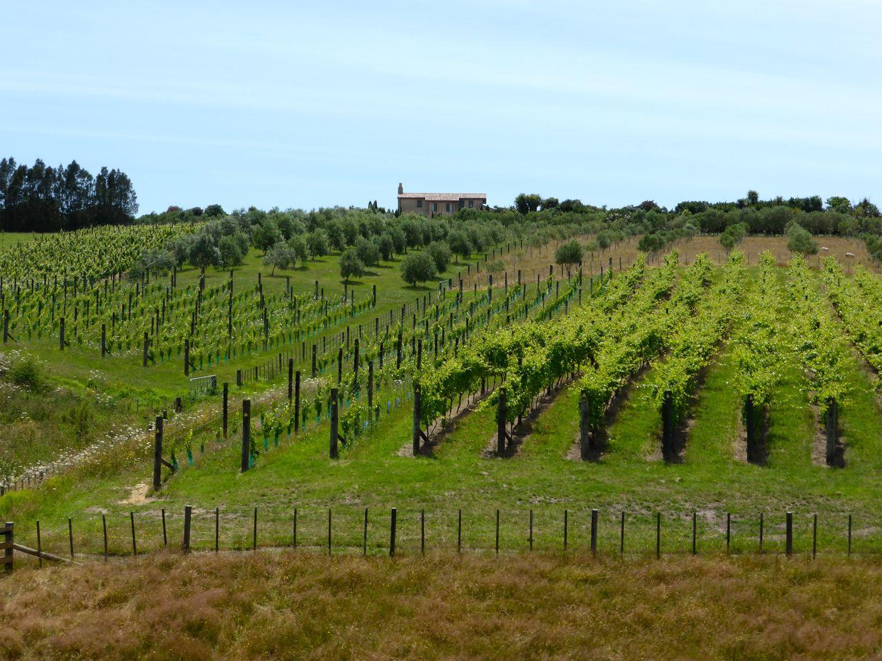 Wijnland NZ, heerlijk om af en toe een glaasje te proeven
