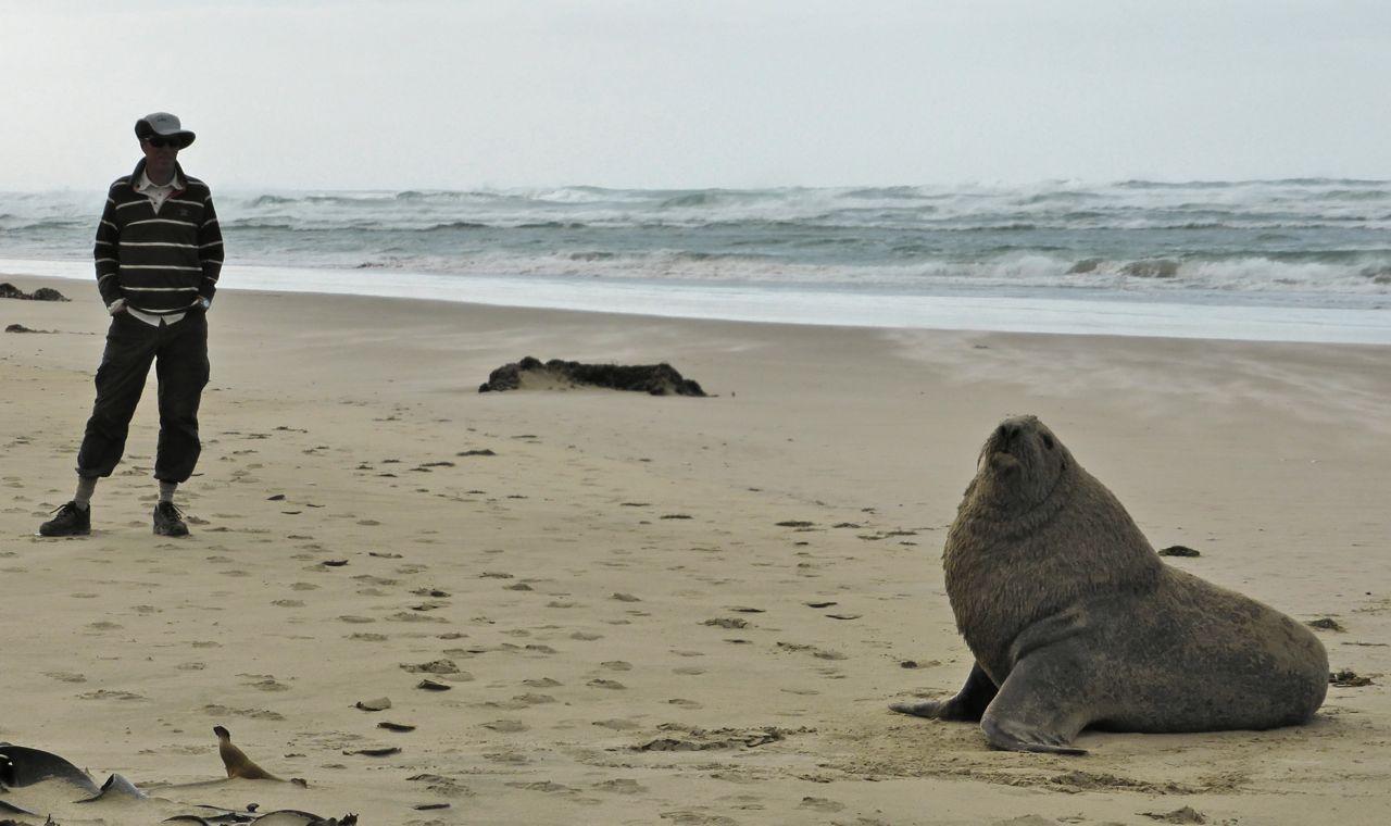 Zeerobben op het strand aan de oostkust