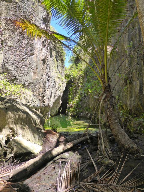 Een oase te midden van de koraalrotsen