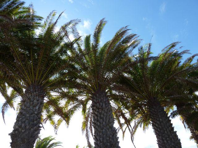 Prachtige palmen in de hoofdstad in contrast met het dorre binnenland