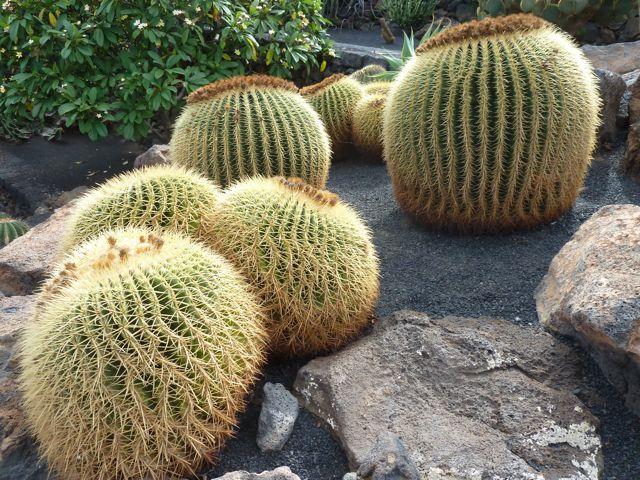 En de rondrit eindigt met een bezoek aan de cactustuin