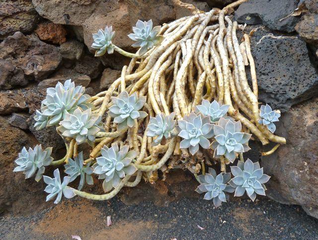 Ontelbare soorten cactussen