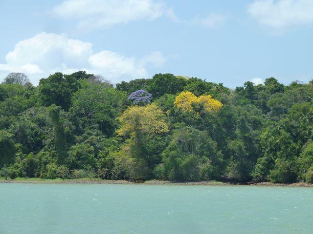 Bij de eerste passage door het kanaal staan de bomen in bloei, geel en paars overal.
