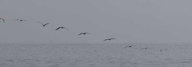 We worden begeleid door zwermen pelikanen