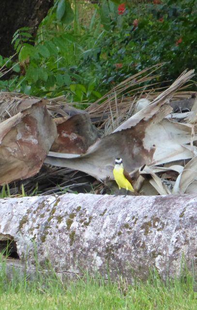 IN het aangrenzende oerwoud waren talloze vogels te horen en te zien