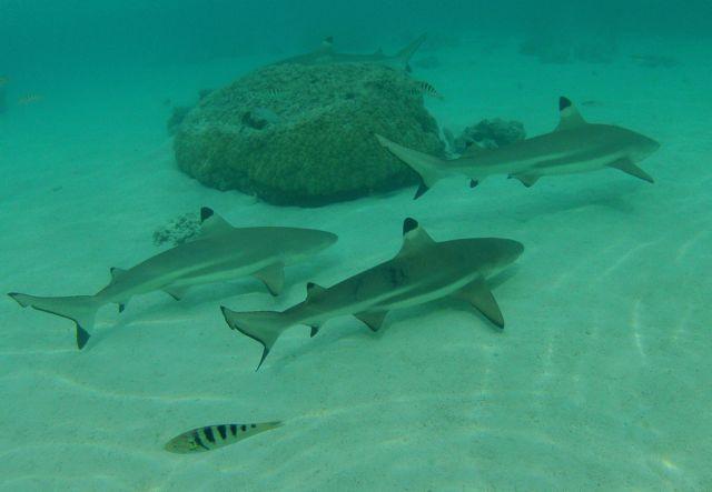 in stingray city zwommen talloze haaien voorbij op een paar meter afstand