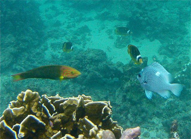 Ook hier fantastisch snorkelen en weer veel manta rays