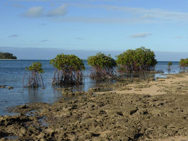 Prachtige mangrove struiken