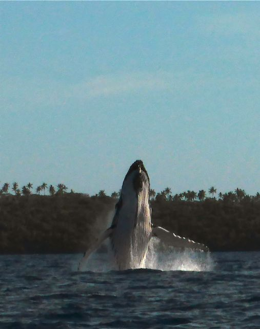En dan springt deze jongen op nog geen 150 meter van ons vandaag uit het water